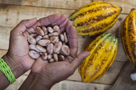 Kakaobohnen in der Hand